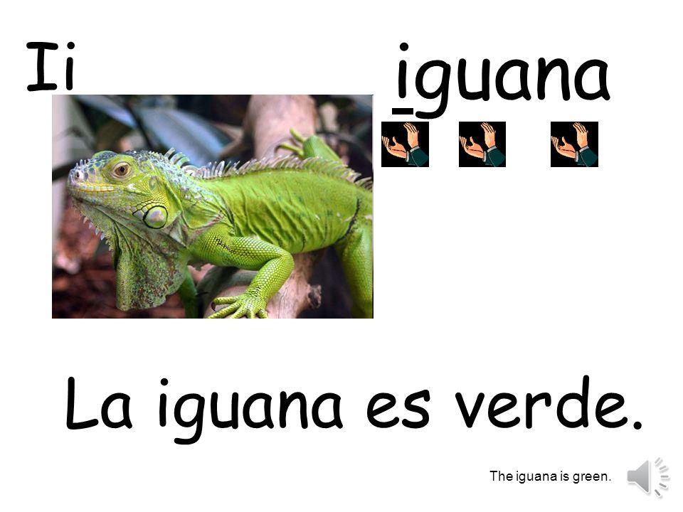 Ii iguana La iguana es verde. The iguana is green.
