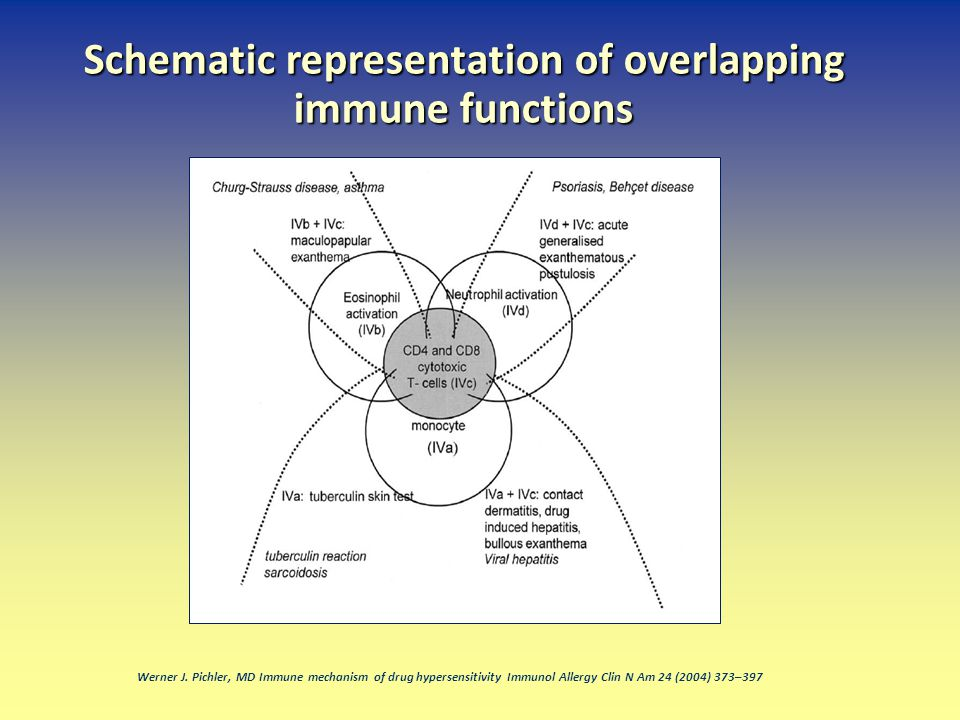 Schematic representation of overlapping immune functions