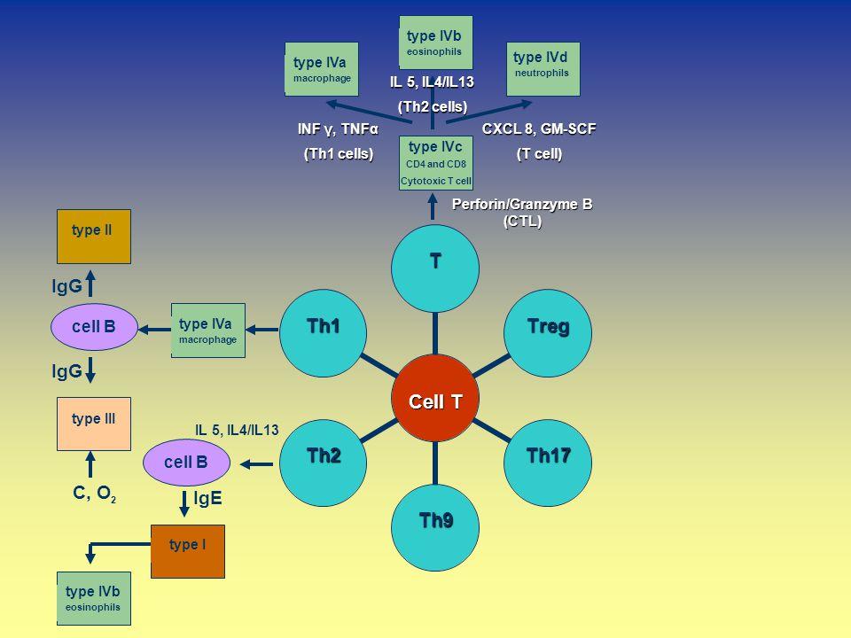 Perforin/Granzyme B (CTL)