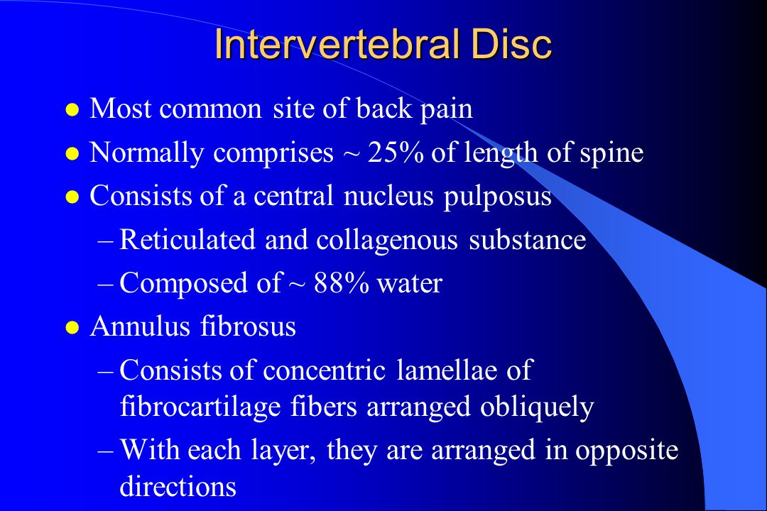Intervertebral Disc Most common site of back pain