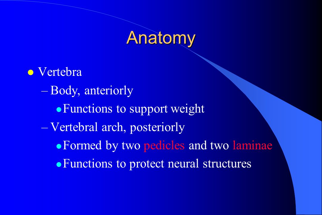 Anatomy Vertebra Body, anteriorly Functions to support weight