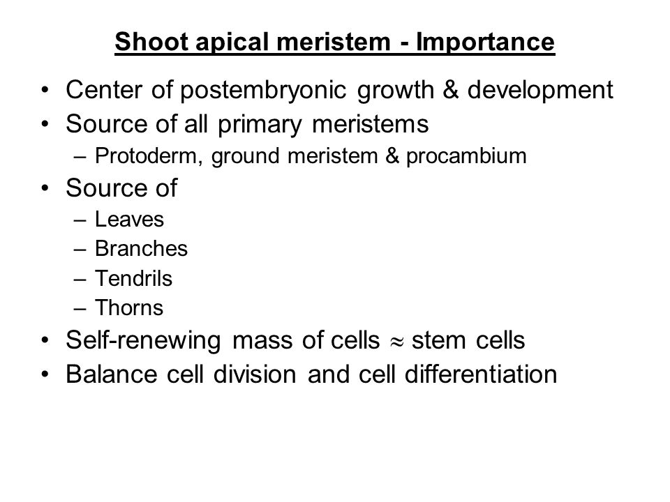 Shoot apical meristem - Importance