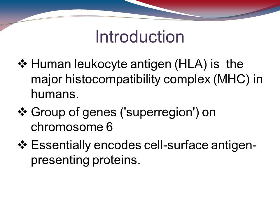 Introduction Human leukocyte antigen (HLA) is the major histocompatibility complex (MHC) in humans.