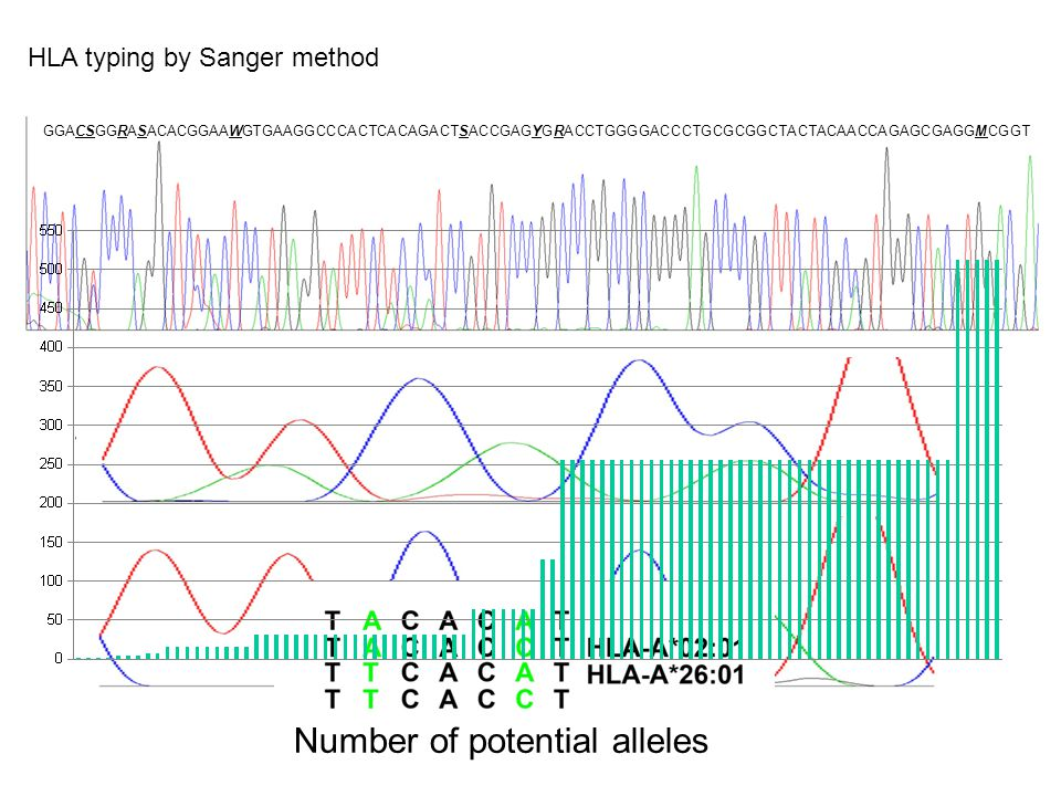 Number of potential alleles