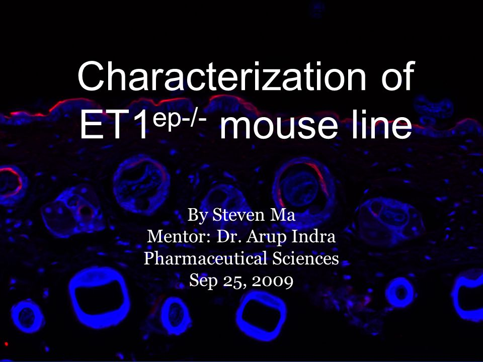 Characterization of ET1ep-/- mouse line