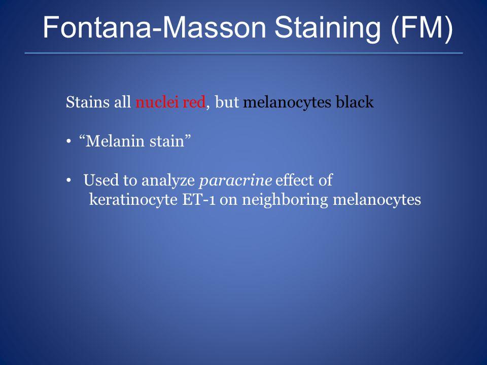 Fontana-Masson Staining (FM)