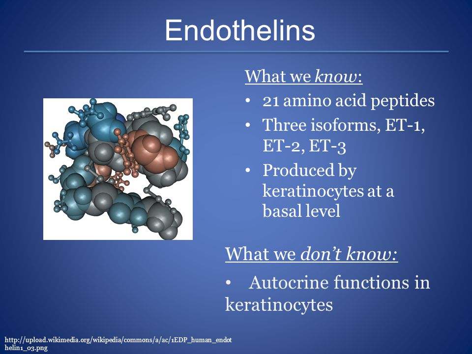 Endothelins What we don't know: Autocrine functions in keratinocytes