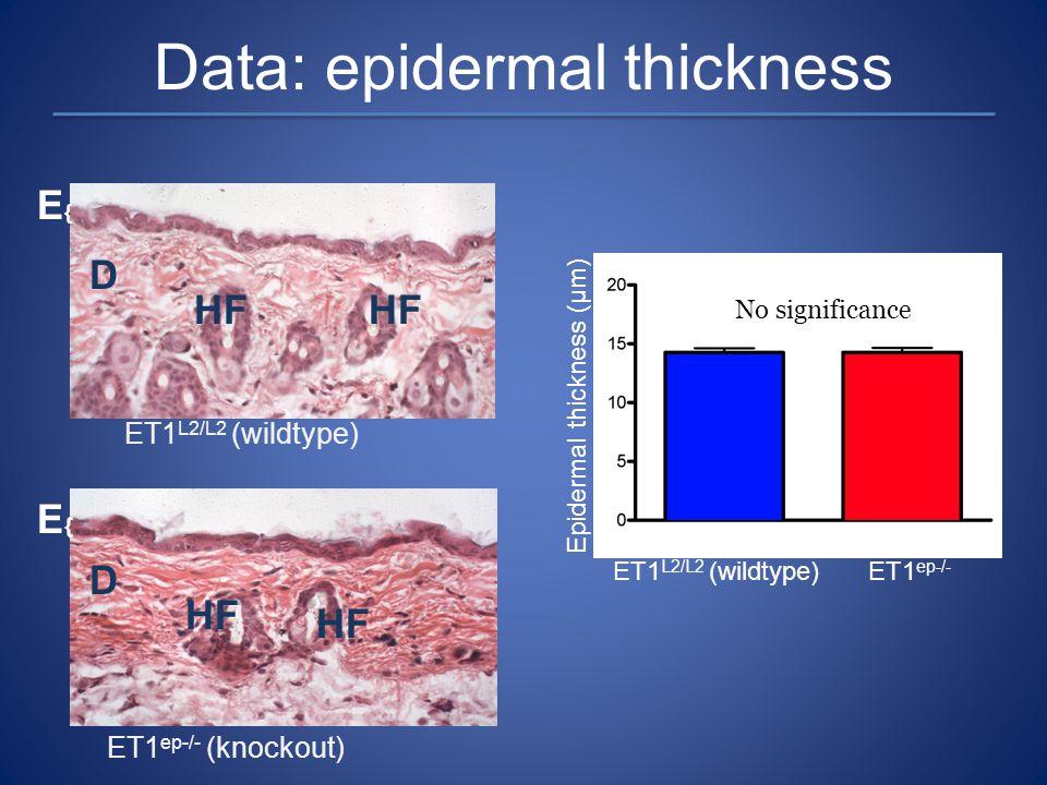 Data: epidermal thickness