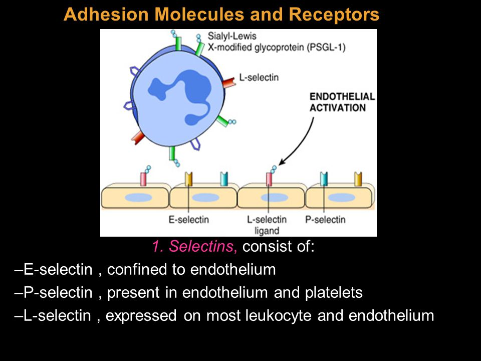Adhesion Molecules and Receptors