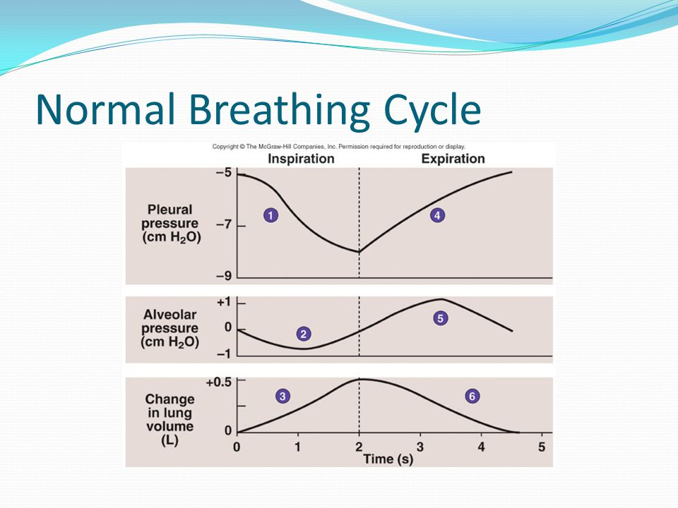 Normal Breathing Cycle