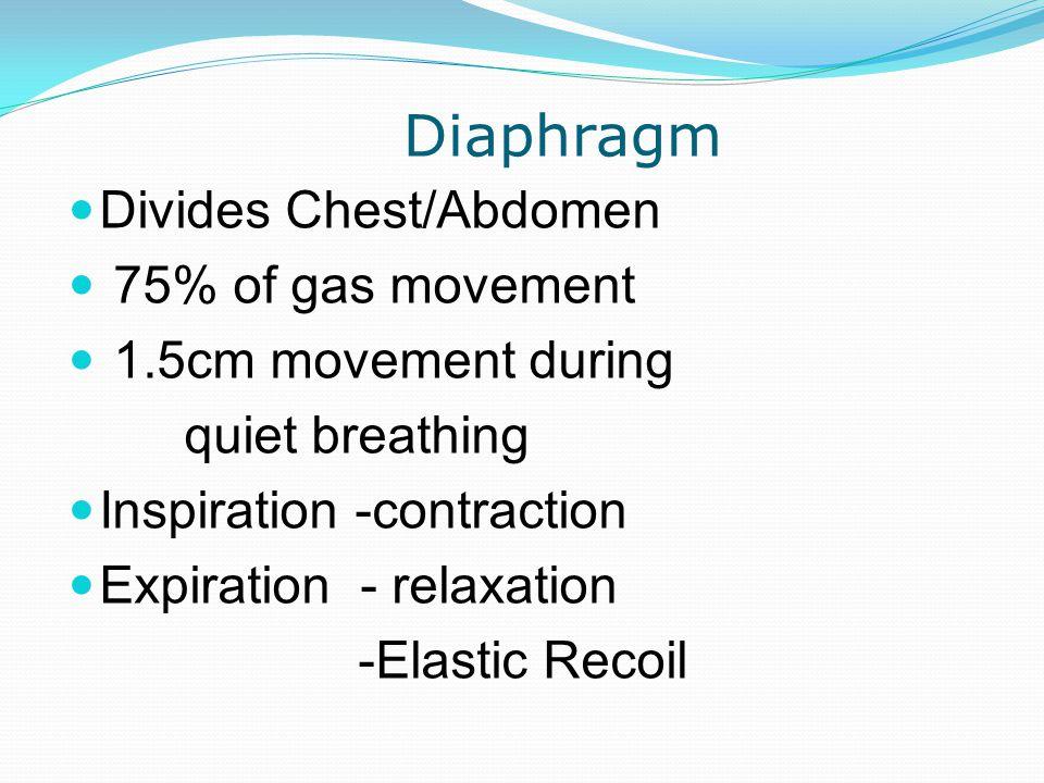 Diaphragm Divides Chest/Abdomen 75% of gas movement