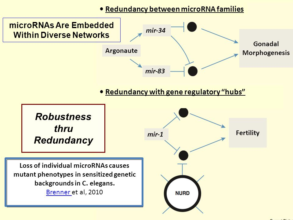 microRNAs Are Embedded Within Diverse Networks