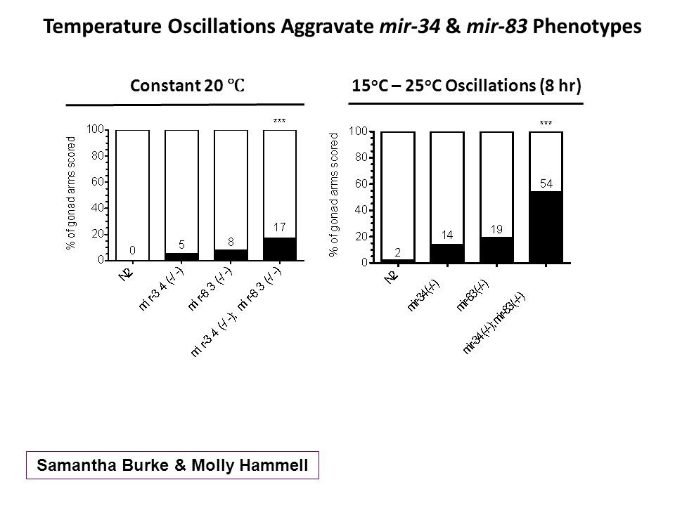 Temperature Oscillations Aggravate mir-34 & mir-83 Phenotypes