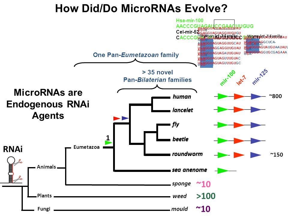 How Did/Do MicroRNAs Evolve
