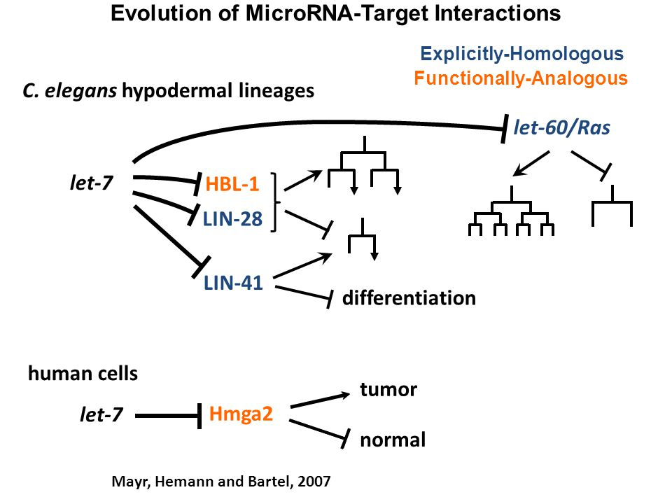 Evolution of MicroRNA-Target Interactions
