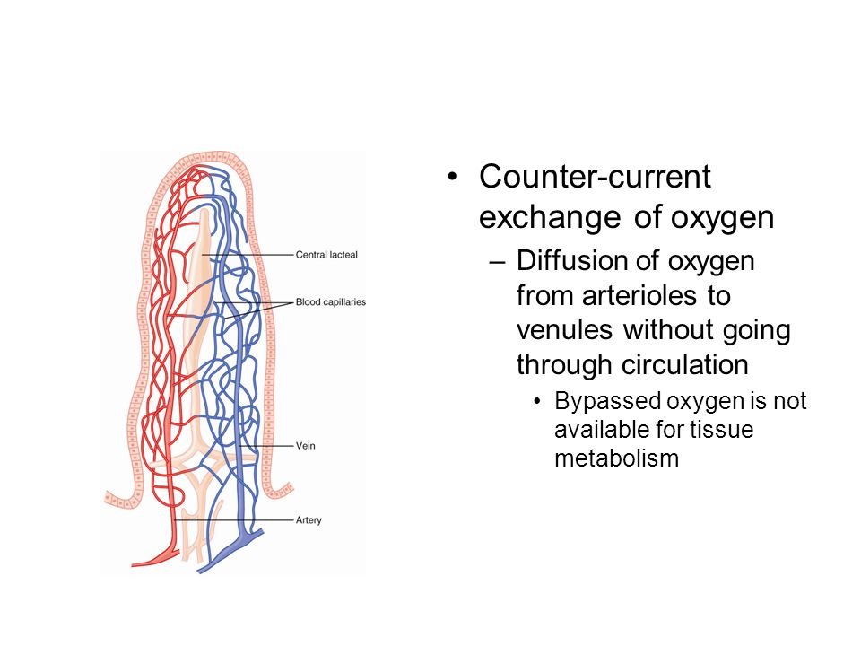 Counter-current exchange of oxygen