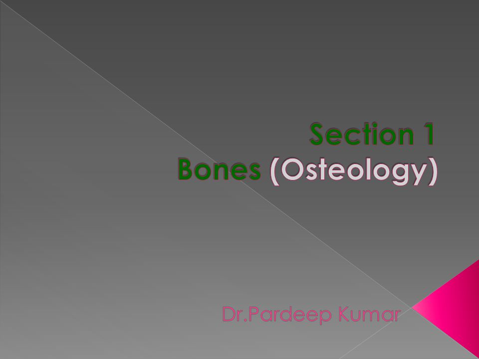 Section 1 Bones (Osteology)