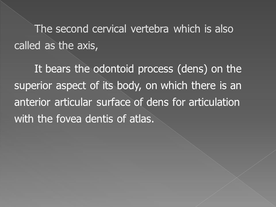 The second cervical vertebra which is also called as the axis,