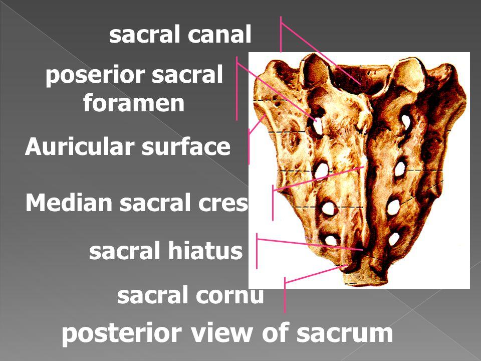 poserior sacral foramen