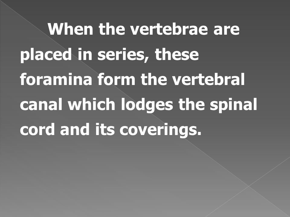 When the vertebrae are placed in series, these foramina form the vertebral canal which lodges the spinal cord and its coverings.