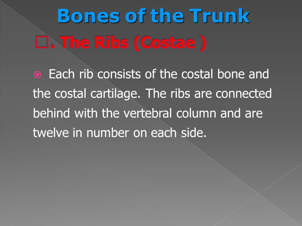Bones of the Trunk Ⅱ. The Ribs (Costae )