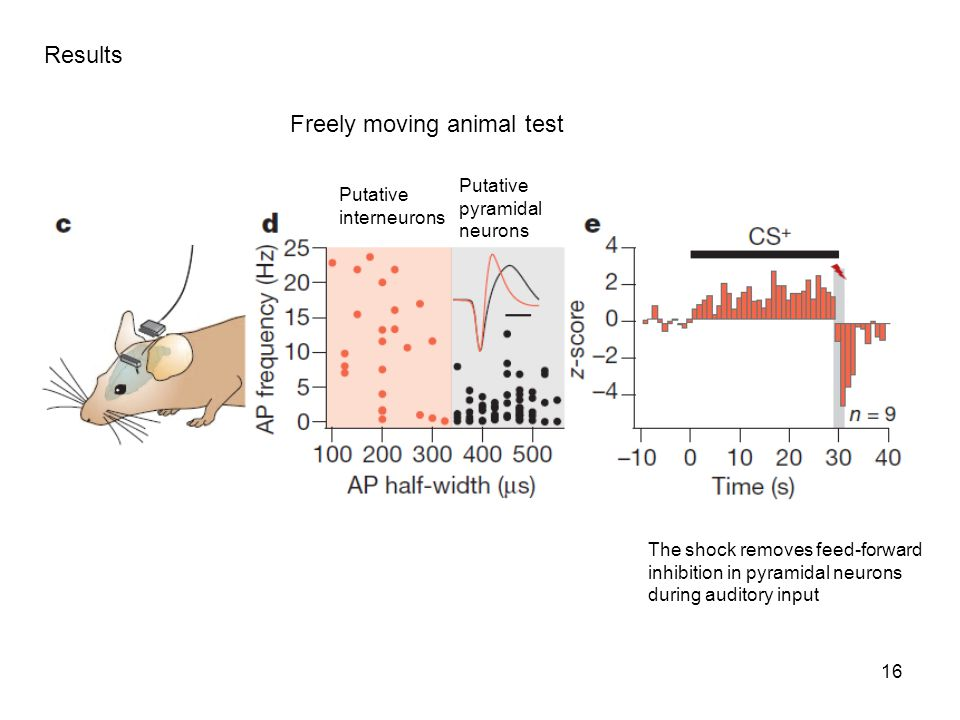 Freely moving animal test