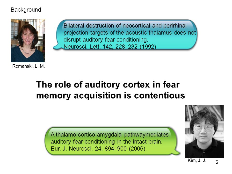 The role of auditory cortex in fear memory acquisition is contentious