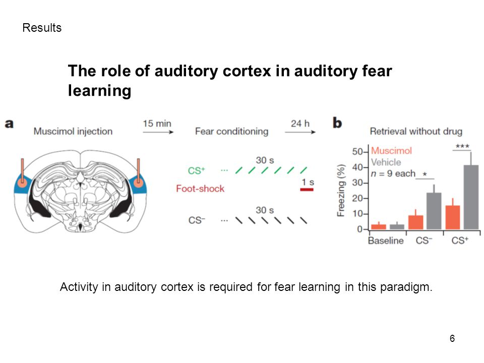 The role of auditory cortex in auditory fear learning