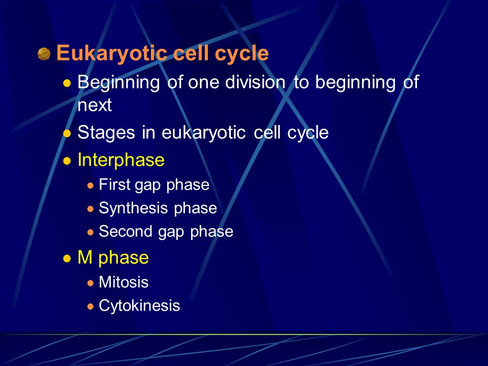 Eukaryotic cell cycle Beginning of one division to beginning of next