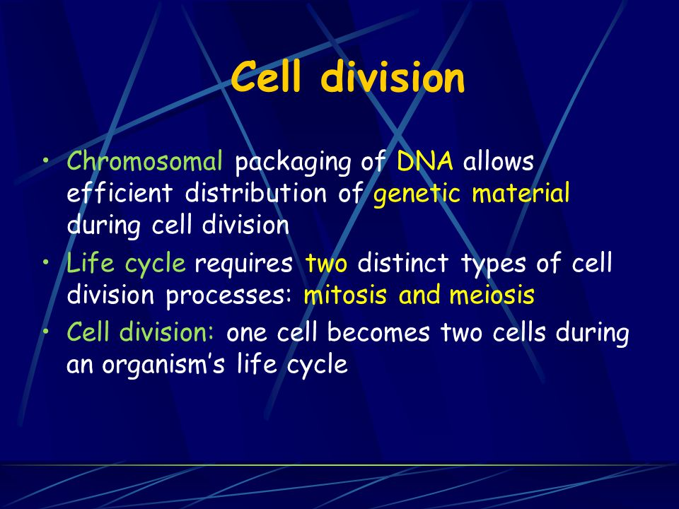 Cell division Chromosomal packaging of DNA allows efficient distribution of genetic material during cell division.
