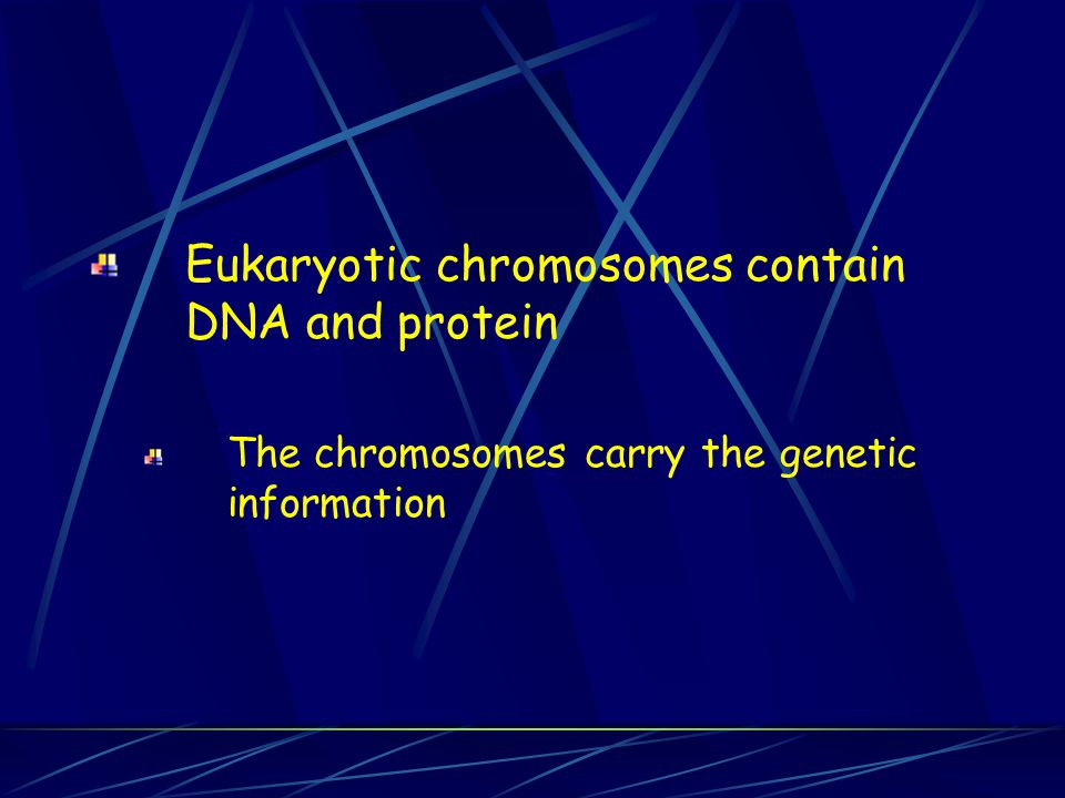 Eukaryotic chromosomes contain DNA and protein