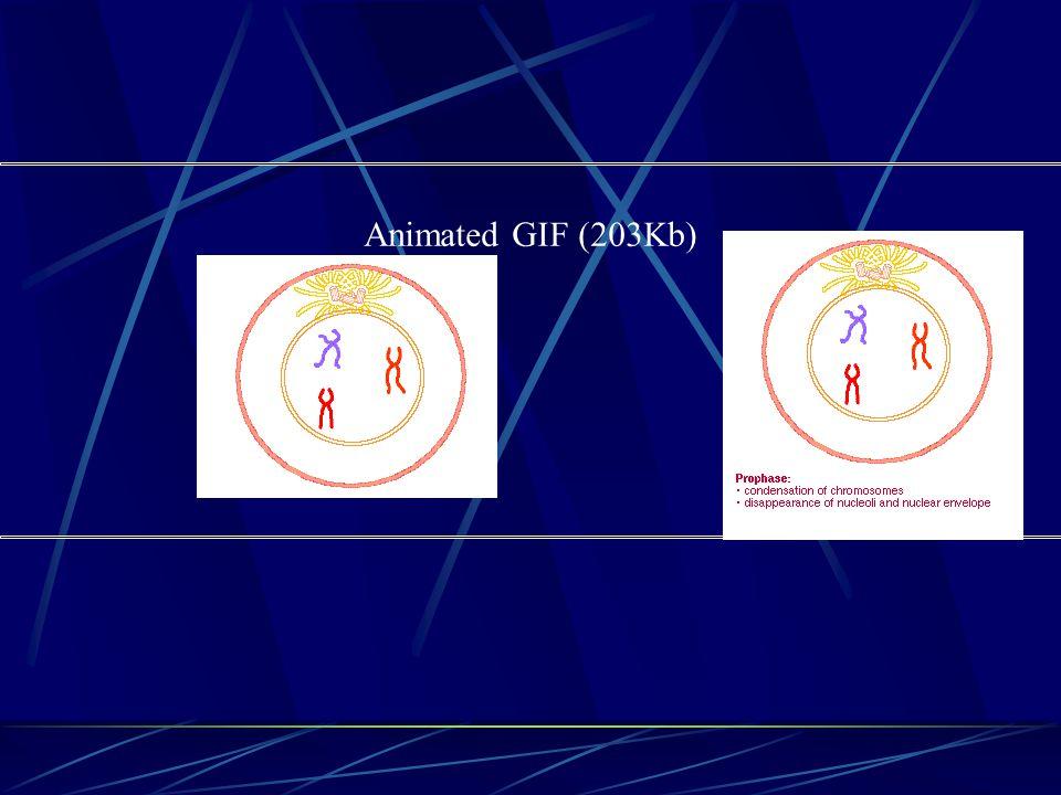Animated GIF (203Kb)