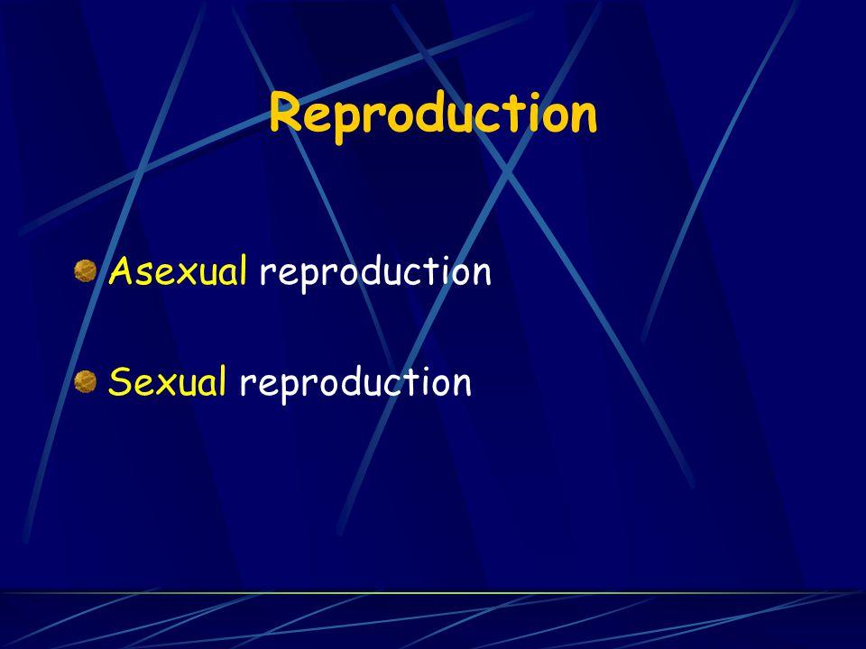 Reproduction Asexual reproduction Sexual reproduction