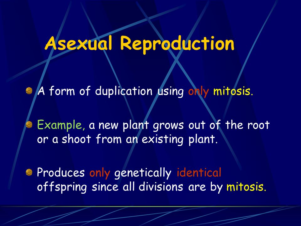 Asexual Reproduction A form of duplication using only mitosis.