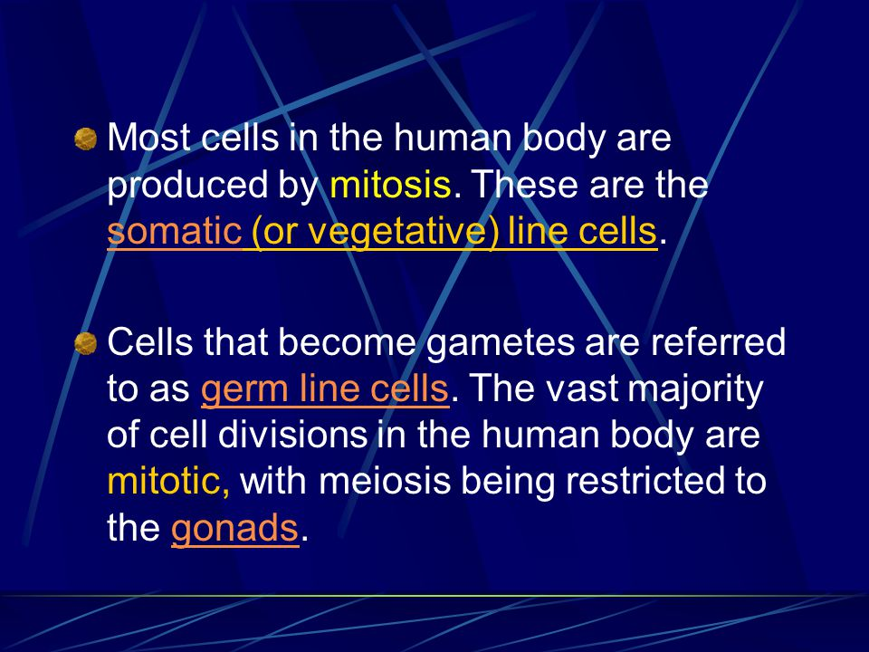Most cells in the human body are produced by mitosis