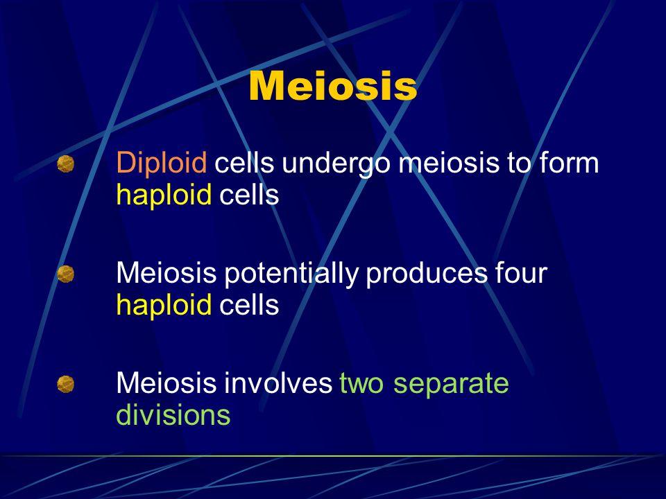 Meiosis Diploid cells undergo meiosis to form haploid cells