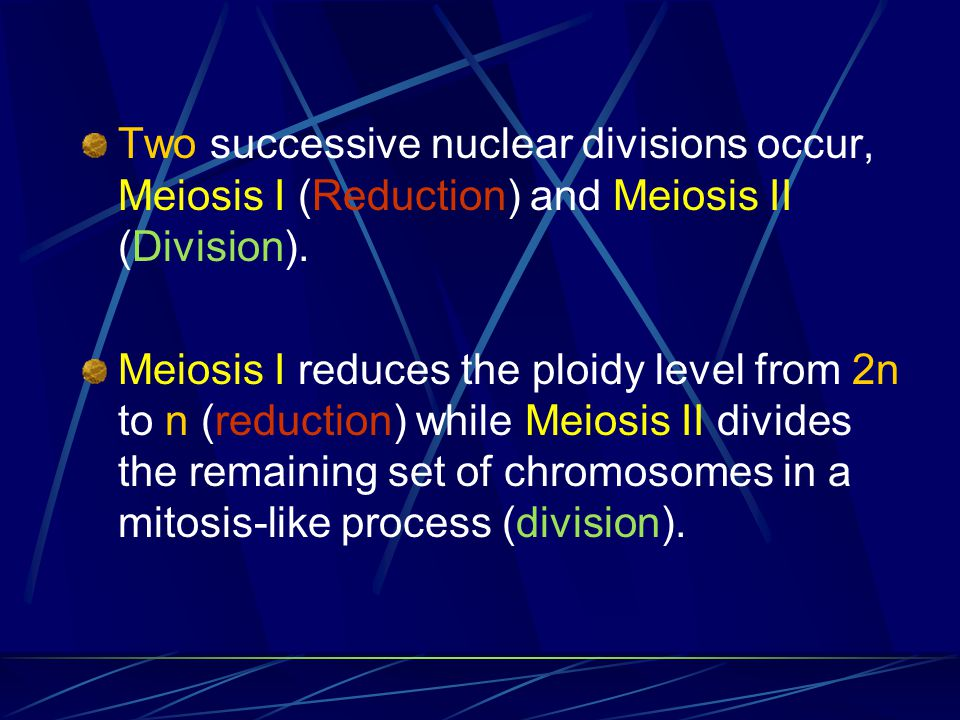 Two successive nuclear divisions occur, Meiosis I (Reduction) and Meiosis II (Division).