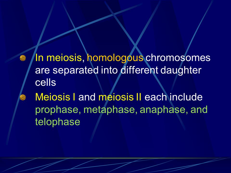 In meiosis, homologous chromosomes are separated into different daughter cells