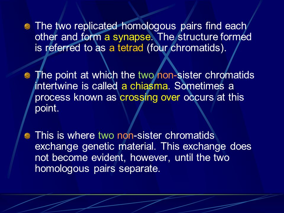 The two replicated homologous pairs find each other and form a synapse