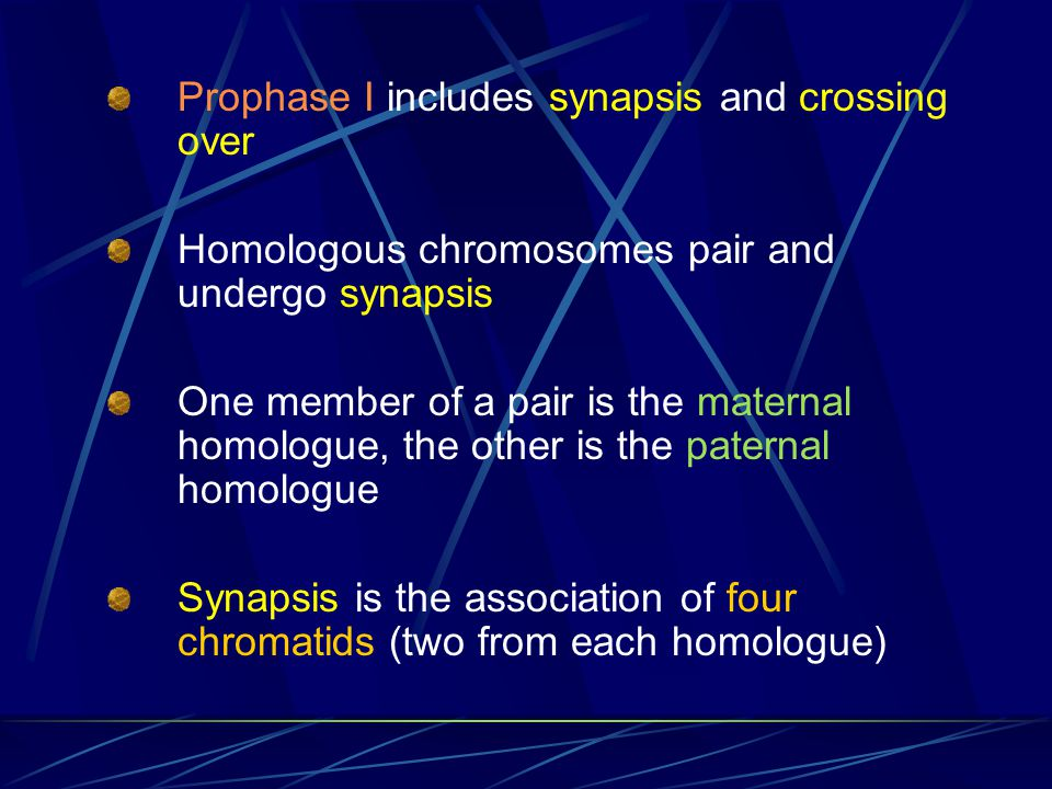Prophase I includes synapsis and crossing over