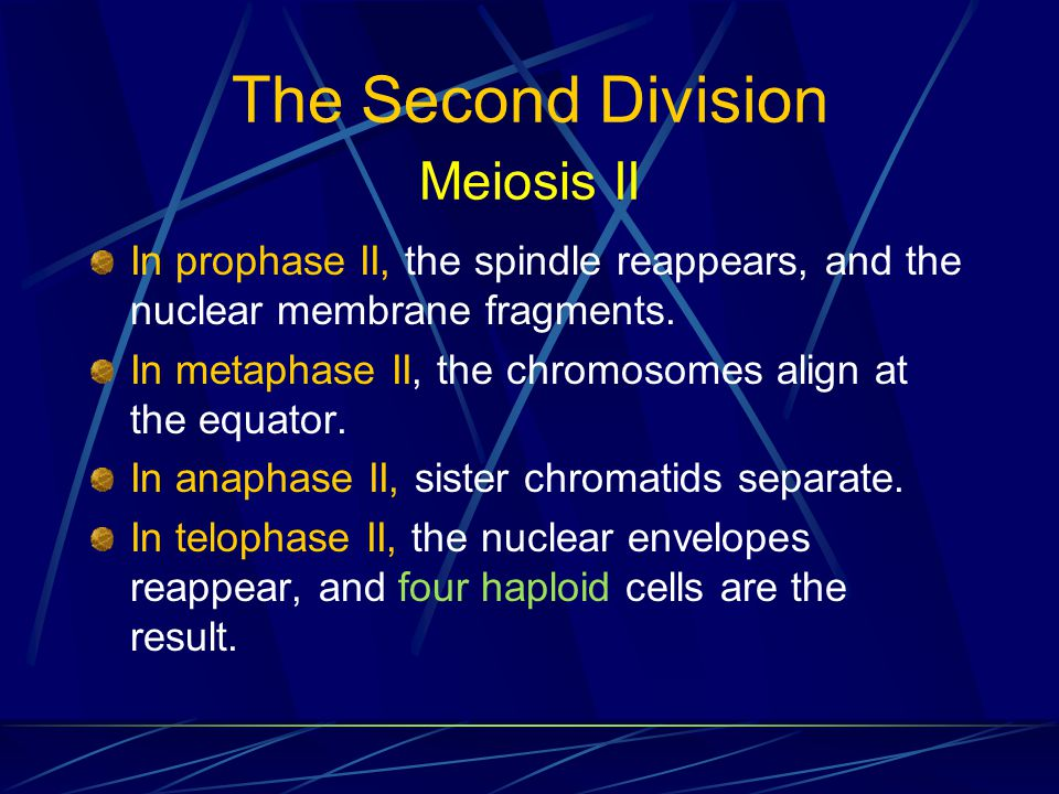 The Second Division Meiosis II