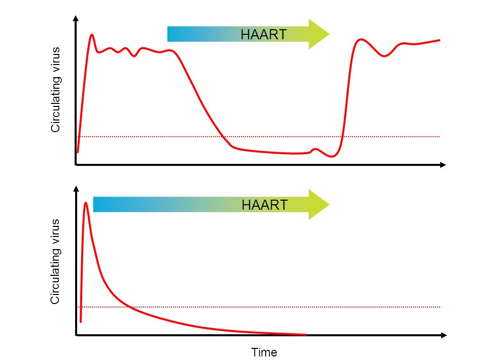 HAART Circulating virus Circulating virus Time HAART