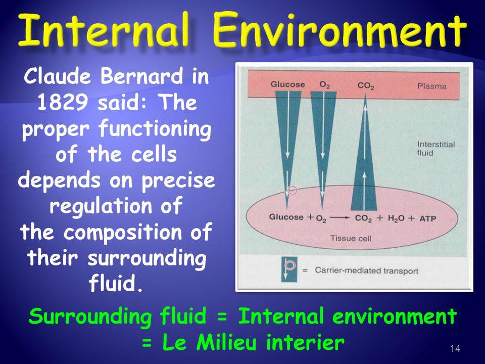 Internal Environment Claude Bernard in 1829 said: The proper functioning. of the cells depends on precise regulation of.