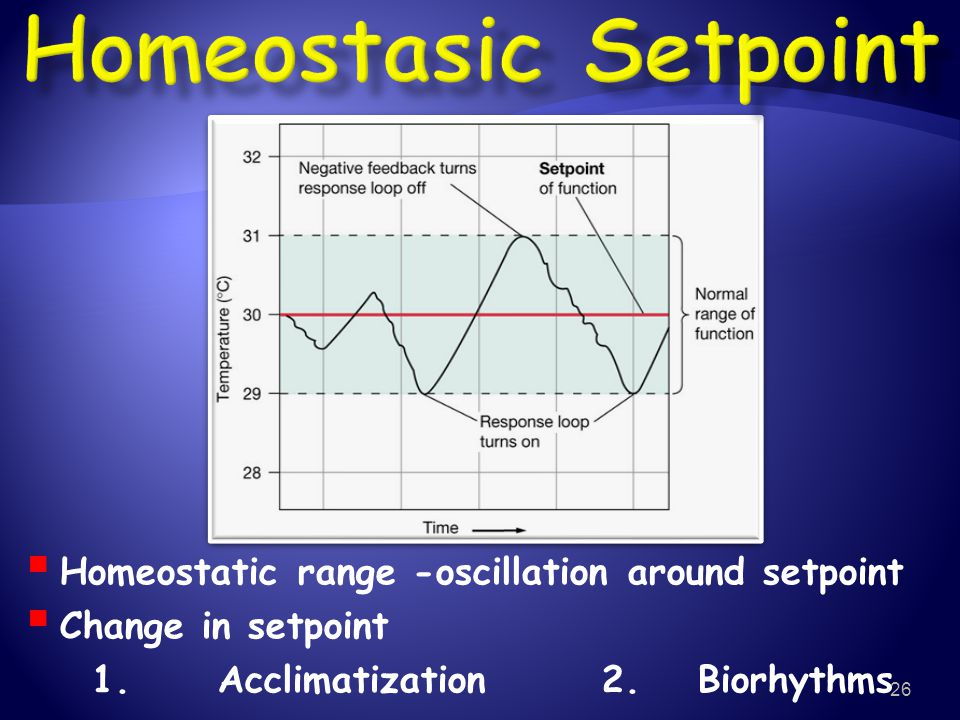 Homeostasic Setpoint Homeostatic range -oscillation around setpoint