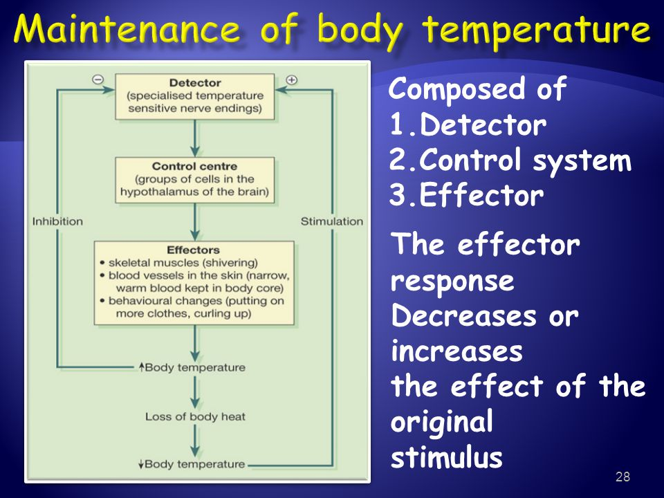 Maintenance of body temperature