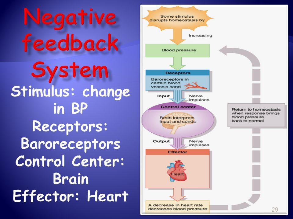 Negative feedback System Receptors: Baroreceptors