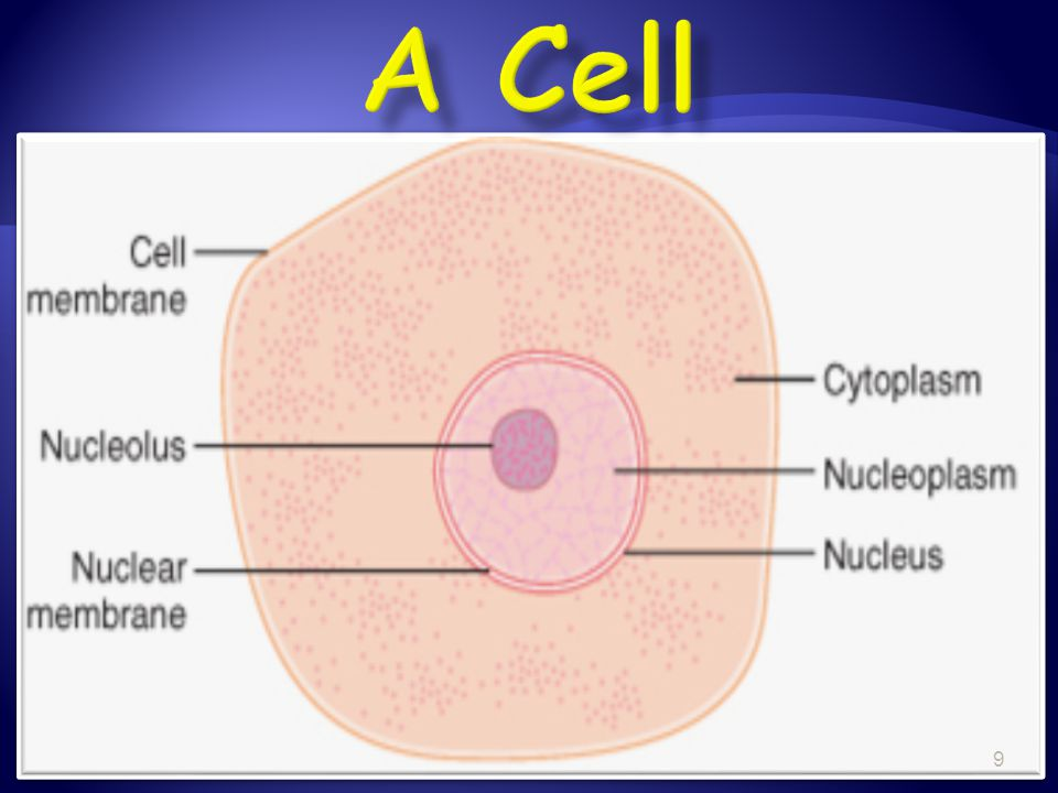 A Cell