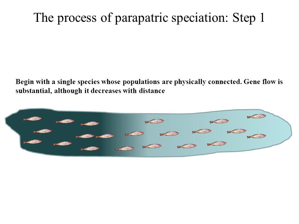 The process of parapatric speciation: Step 1