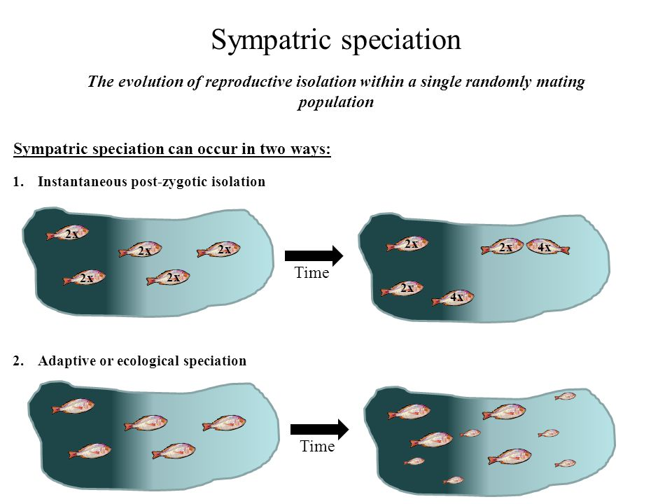 Sympatric speciation The evolution of reproductive isolation within a single randomly mating population.