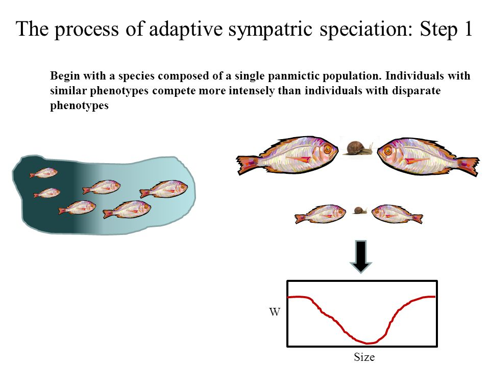 The process of adaptive sympatric speciation: Step 1